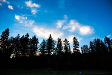 Widok z okna na drzewa i las