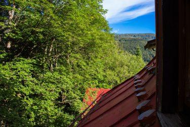 Widok z okna na las i góry