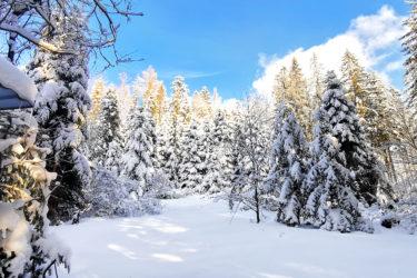Ośnieżony las w Sopotni Wielkiej