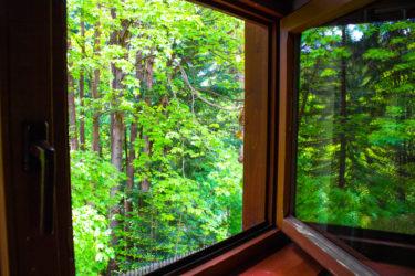 Widok z okna na las