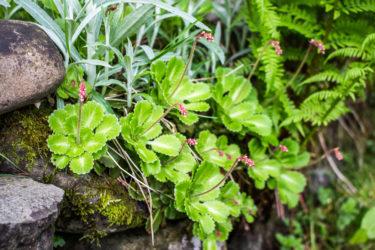 kwiaty pomiędzy kamieniami, na trasie spacerowej